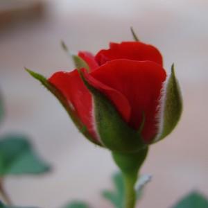 Dama de vermelho