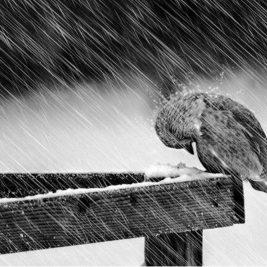 little-bird-in-the-storm