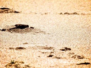 Deserto: Lugar desejável