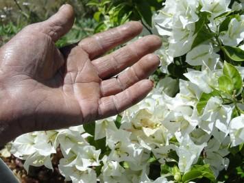 Mãos de Jardineiro