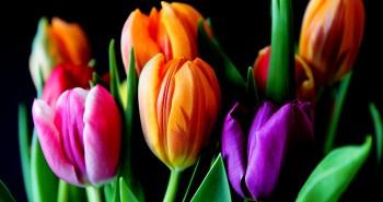 Flores para meu amor!
